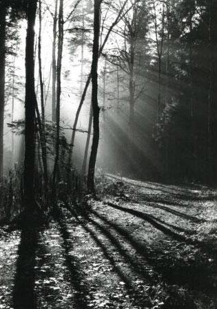 arbre_hiver_alwin_tolle