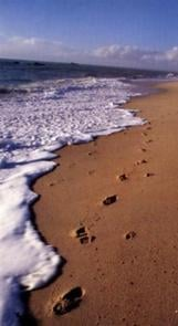 traces_sable